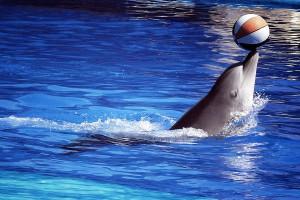 delfinario
