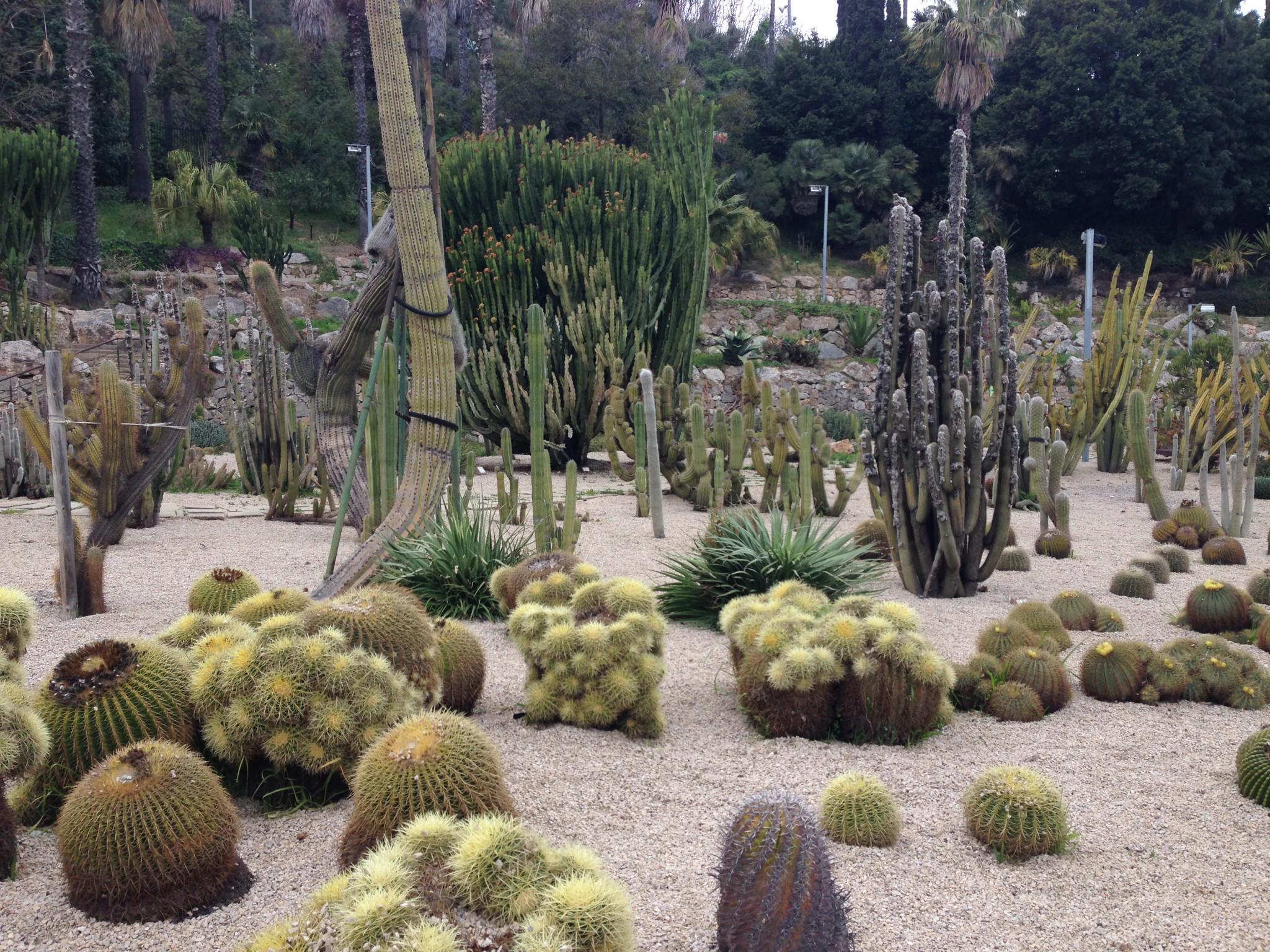 El parque de los cactus de Barcelona