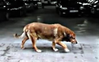 Canelo, el perro más famoso de Cádiz